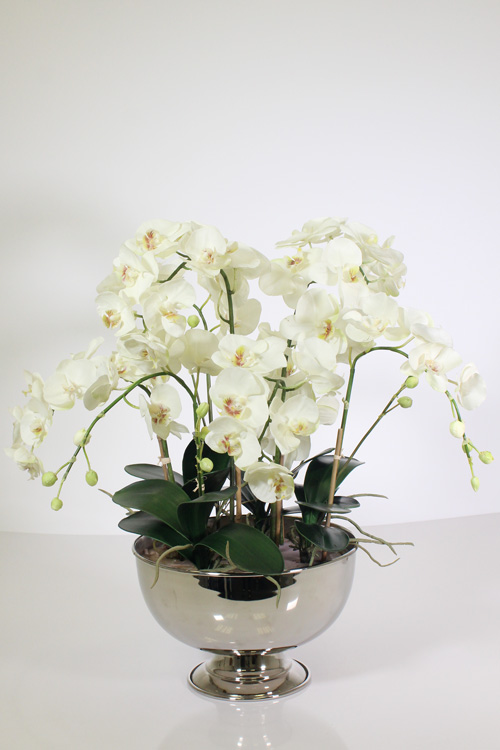 http://www.flower-genie.co.uk/profile/Orchids in Silver Tin