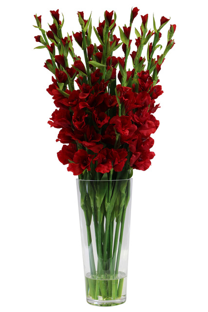 https://www.flower-genie.co.uk/profile/Red Glads