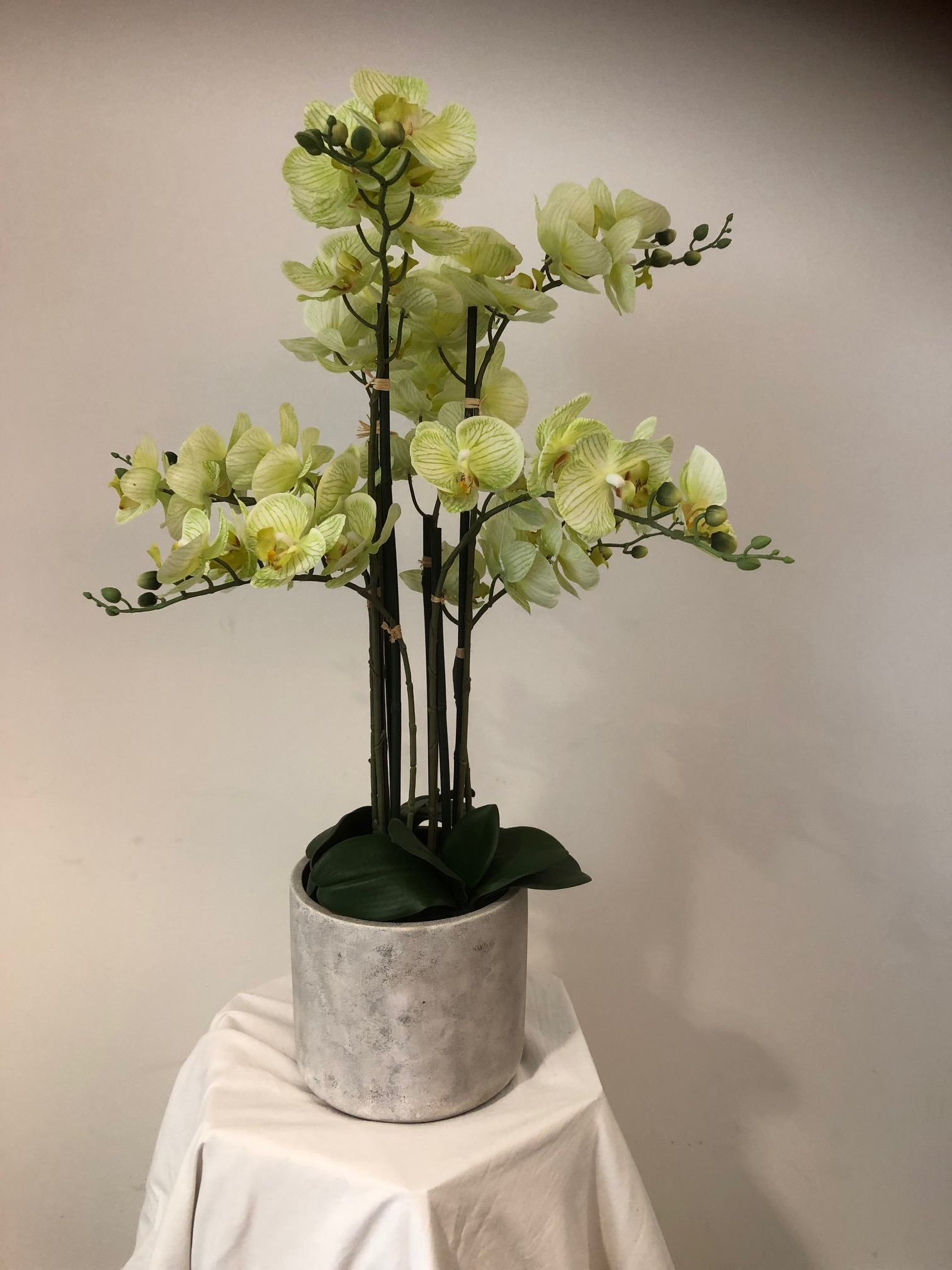 https://www.flower-genie.co.uk/profile/Orchids in Grey Pot